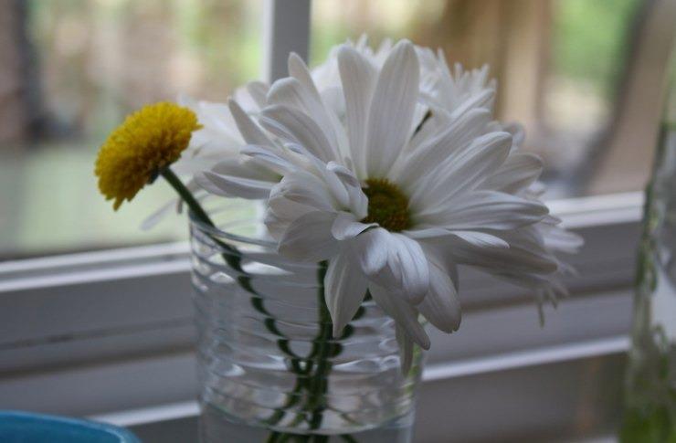 Αποτέλεσμα εικόνας για Τα λουλούδια στο σπίτι μειώνουν άγχος και πόνο