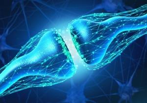 Τεχνητή σύναψη εγκεφάλου επικοινωνεί με τα ζωντανά κύτταρα